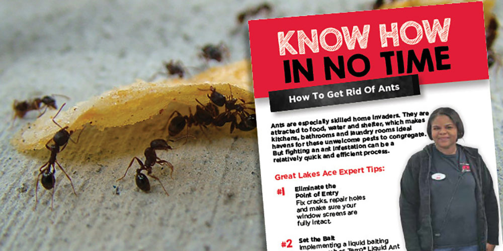 Getting Rid of Ants  - Great Lakes Ace Hardware Store